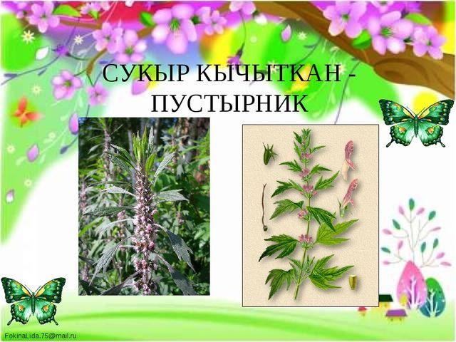 СУКЫР КЫЧЫТКАН - ПУСТЫРНИК FokinaLida.75@mail.ru