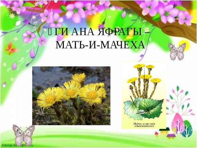 ҮГИ АНА ЯФРАГЫ – МАТЬ-И-МАЧЕХА FokinaLida.75@mail.ru