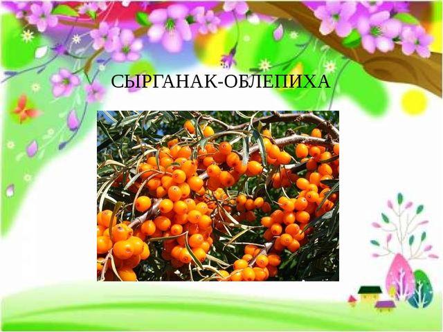 СЫРГАНАК-ОБЛЕПИХА FokinaLida.75@mail.ru