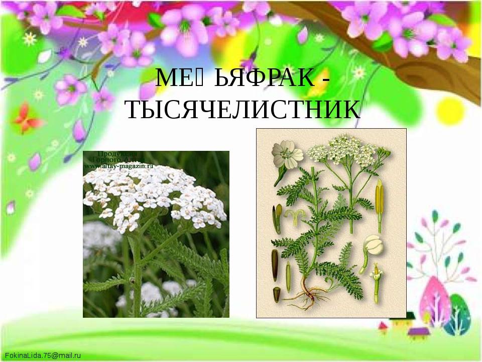 МЕҢЬЯФРАК - ТЫСЯЧЕЛИСТНИК FokinaLida.75@mail.ru