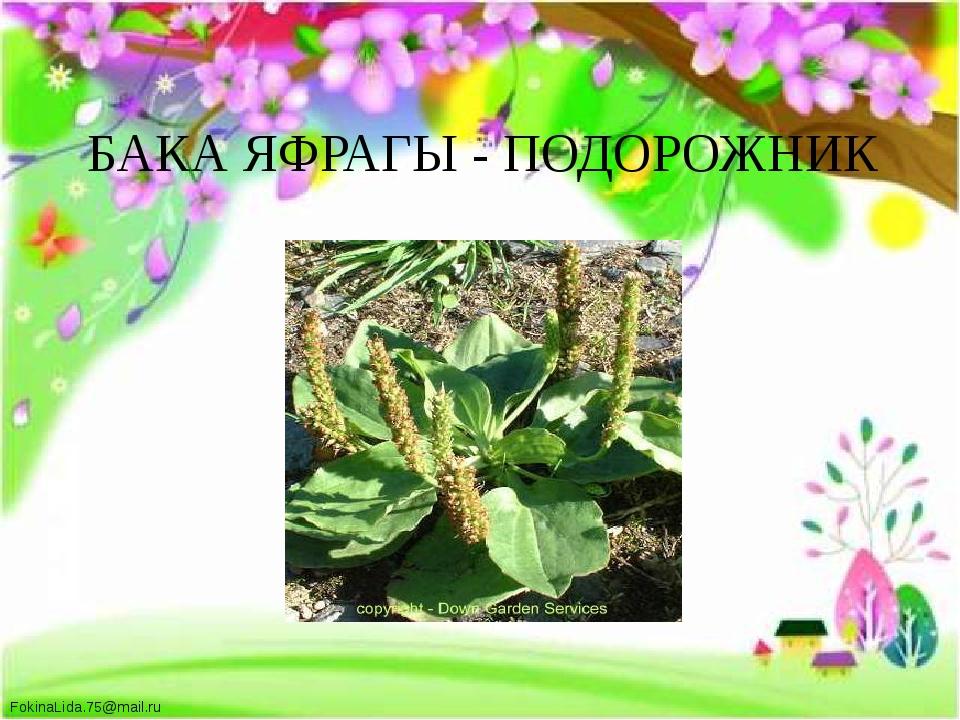 БАКА ЯФРАГЫ - ПОДОРОЖНИК FokinaLida.75@mail.ru