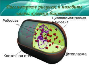 Рассмотрите рисунок и назовите части клетки бактерии. Цитоплазма Цитоплазмат