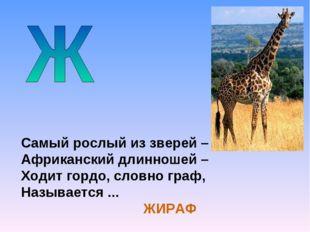 Самый рослый из зверей – Африканский длинношей – Ходит гордо, словно граф, На