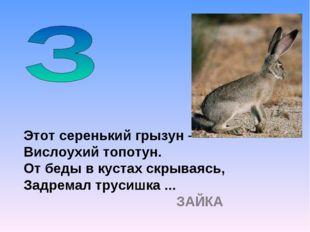 Этот серенький грызун – Вислоухий топотун. От беды в кустах скрываясь, Задрем