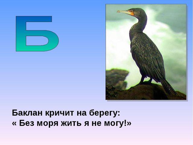 Баклан кричит на берегу: « Без моря жить я не могу!»