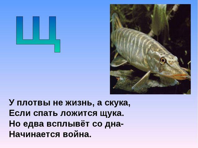 У плотвы не жизнь, а скука, Если спать ложится щука. Но едва всплывёт со дна-...