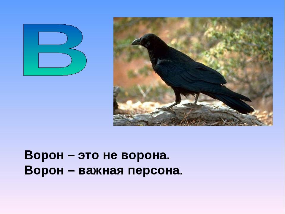 Ворон – это не ворона. Ворон – важная персона.