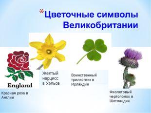 Красная роза в Англии Желтый нарцисс в Уэльсе Воинственный трилистник в Ирла