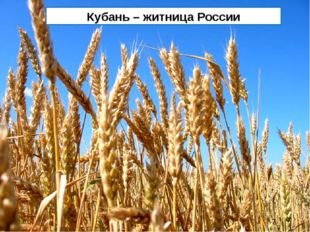 Кубань – житница России Кубань – житница России