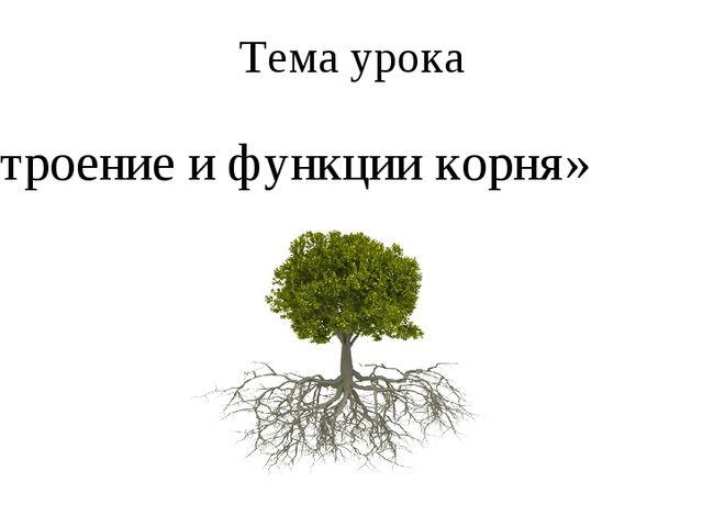 Тема урока «Строение и функции корня»