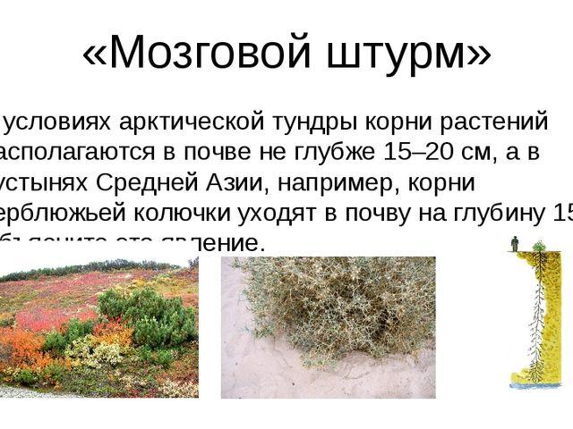 «Мозговой штурм» В условиях арктической тундры корни растений располагаются в...