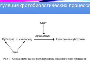 Регуляция фотобиологических процессов