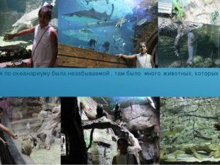 Экскурсия по океанариуму была незабываемой , там было много животных, которы