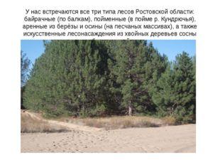 У нас встречаются все три типа лесов Ростовской области: байрачные (по балкам