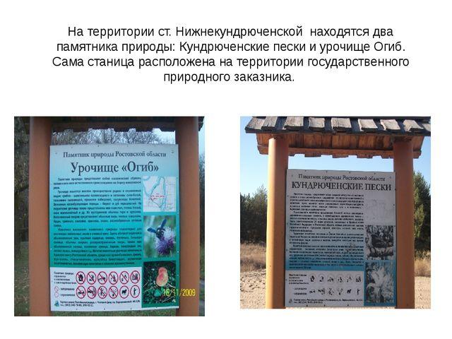 На территории ст. Нижнекундрюченской находятся два памятника природы: Кундрюч...