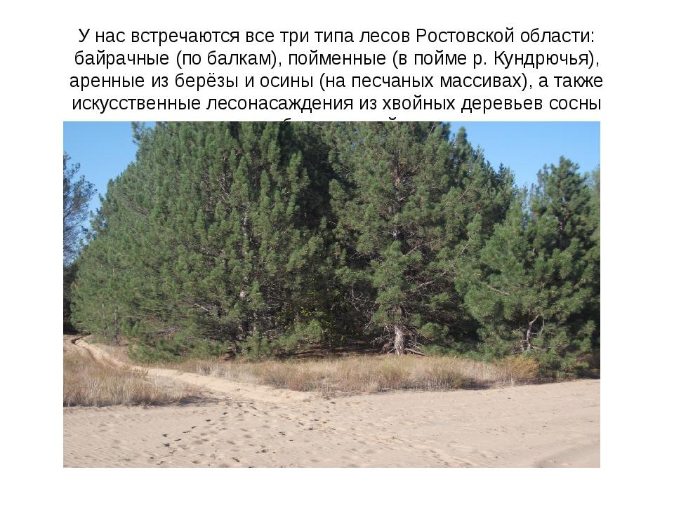 У нас встречаются все три типа лесов Ростовской области: байрачные (по балкам...