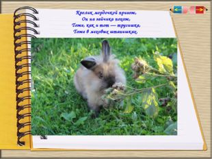 Кролик мордочкой пригож, Он на зайчика похож, Тоже, как и тот — трусишка, Тож