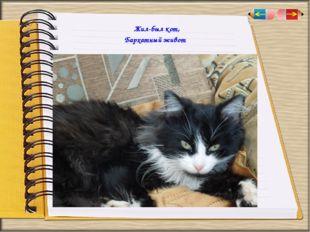 Жил-был кот, Бархатный живот