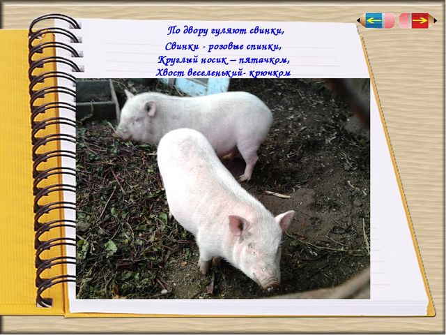 По двору гуляютсвинки, Свинки - розовые спинки, Круглый носик – пятачком, Х...