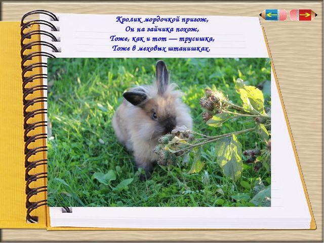 Кролик мордочкой пригож, Он на зайчика похож, Тоже, как и тот — трусишка, Тож...