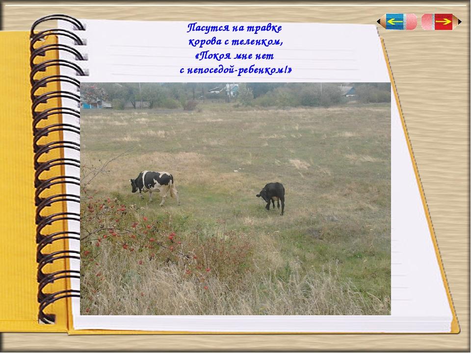 Пасутся на травке корова стеленком, «Покоя мне нет с непоседой-ребенком!»