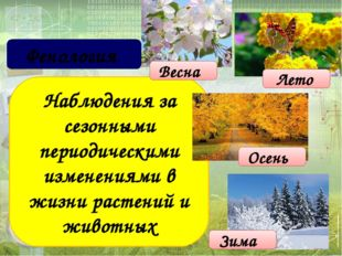 Наблюдения за сезонными периодическими изменениями в жизни растений и животн