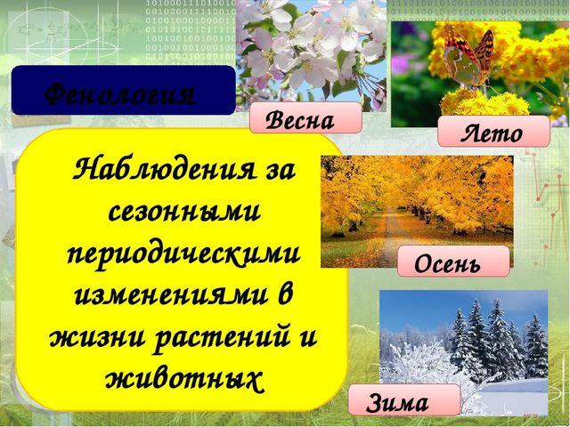 Наблюдения за сезонными периодическими изменениями в жизни растений и животн...