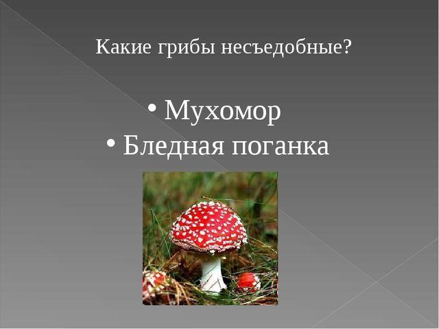 Какие грибы несъедобные? Мухомор Бледная поганка