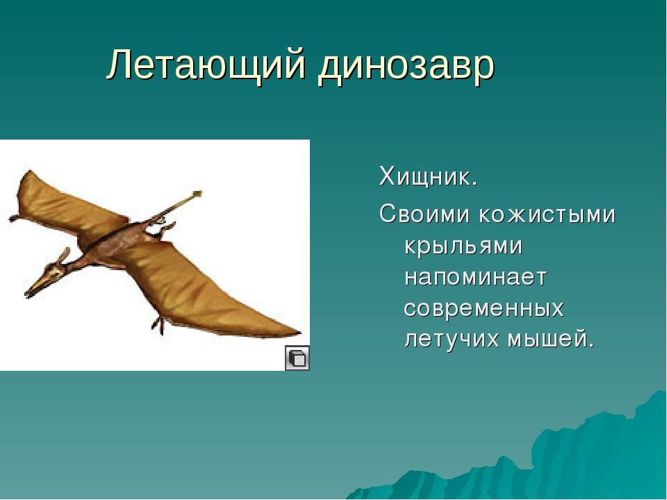 Летающий динозавр Хищник. Своими кожистыми крыльями напоминает современных ле...