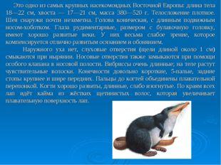 Это одно из самых крупных насекомоядных Восточной Европы: длина тела 18—22 с