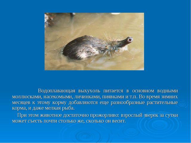 Водоплавающая выхухоль питается в основном водными моллюсками, насекомыми, л...