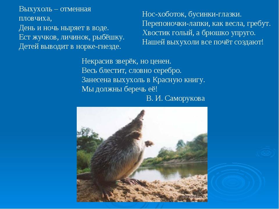 Выхухоль – отменная пловчиха, День и ночь ныряет в воде. Ест жучков, личинок,...
