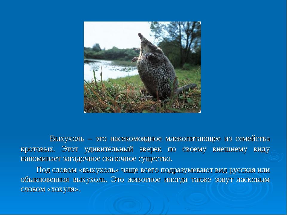 Выхухоль – это насекомоядное млекопитающее из семейства кротовых. Этот удиви...