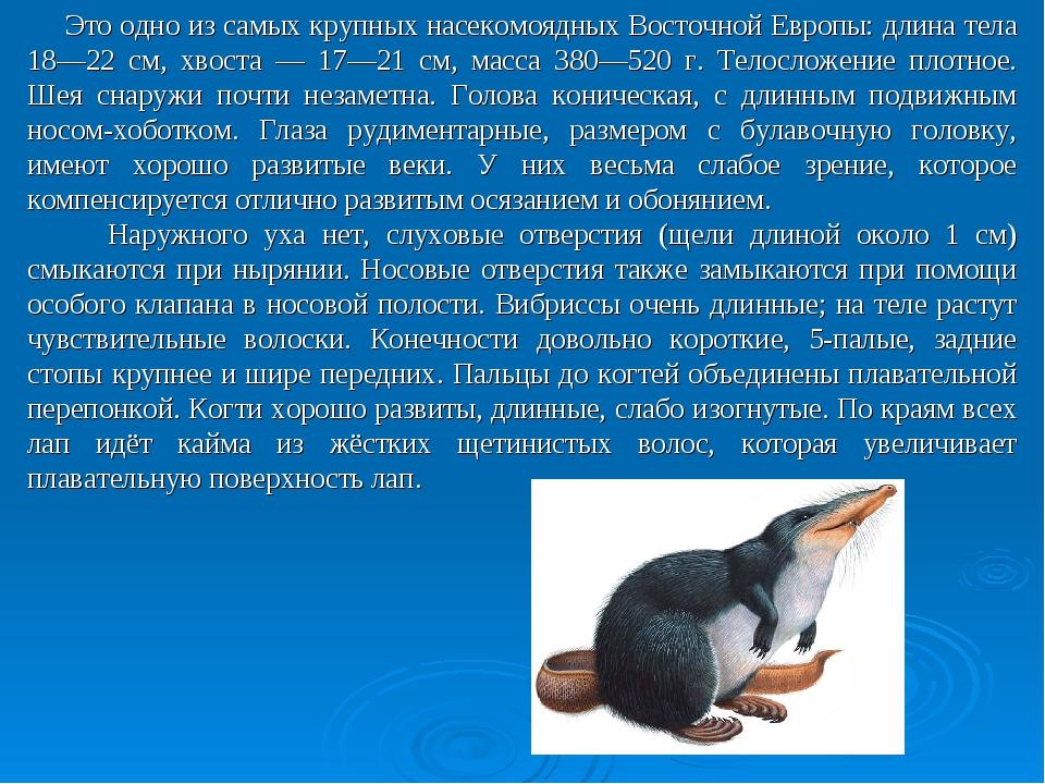 Это одно из самых крупных насекомоядных Восточной Европы: длина тела 18—22 с...