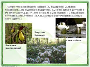 На территории заповедника найдено 132 вида грибов, 212 видов лишайников, 124