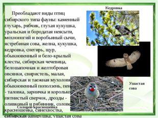 Преобладают виды птиц сибирского типа фауны: каменный глухарь, рябчик, глуха