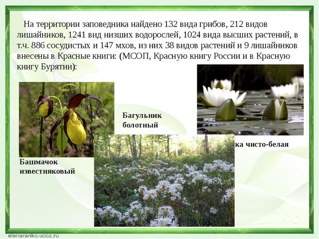 На территории заповедника найдено 132 вида грибов, 212 видов лишайников, 124...