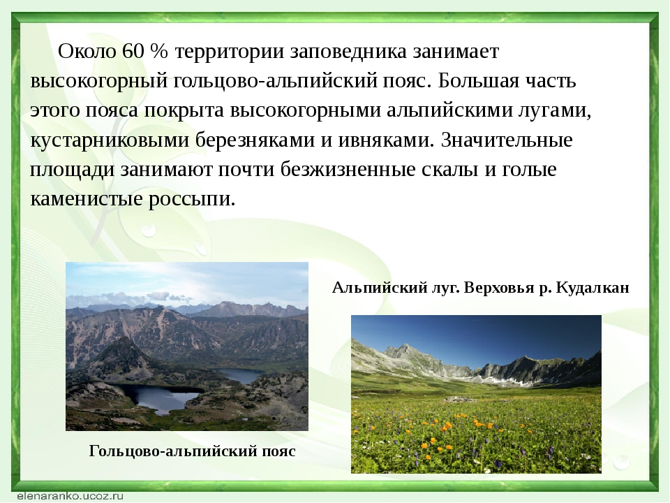 Около 60 % территории заповедника занимает высокогорный гольцово-альпийский...