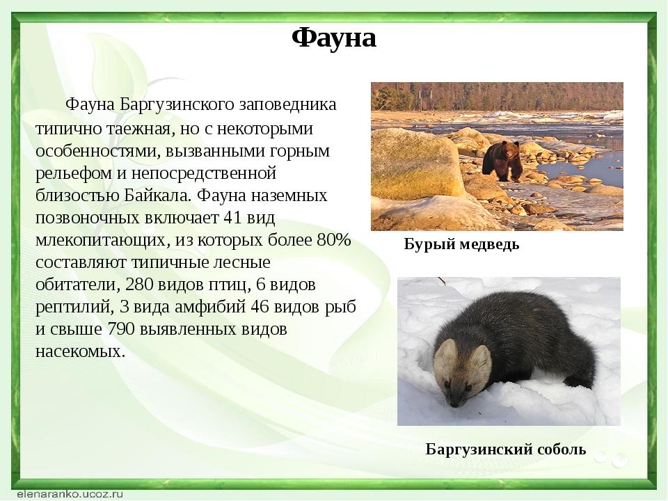 Фауна Фауна Баргузинского заповедника типично таежная, но с некоторыми особен...