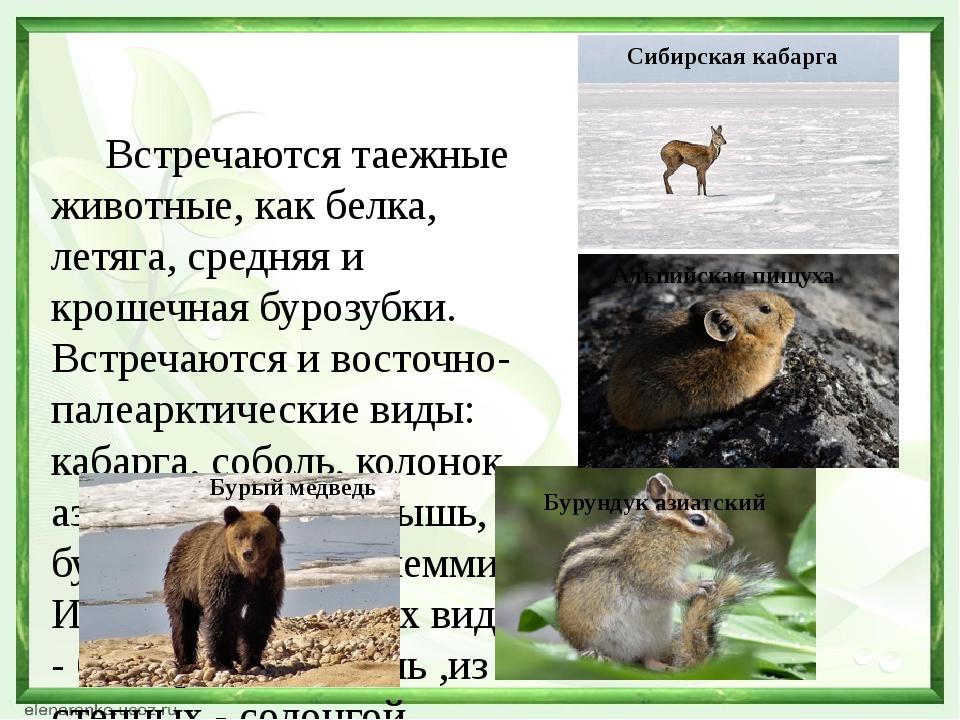 Встречаются таежные животные, как белка, летяга, средняя и крошечная бурозуб...