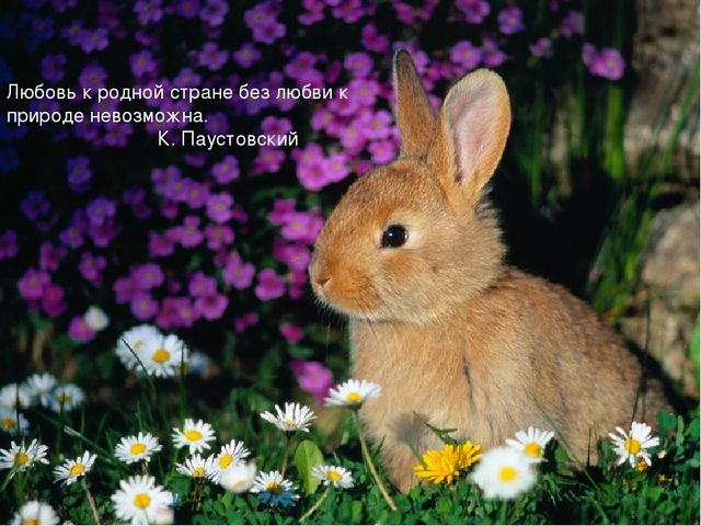 Любовь к родной стране без любви к природе невозможна. К. Паустовский Любовь...