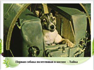 Первая собака полетевшая в космос - Лайка