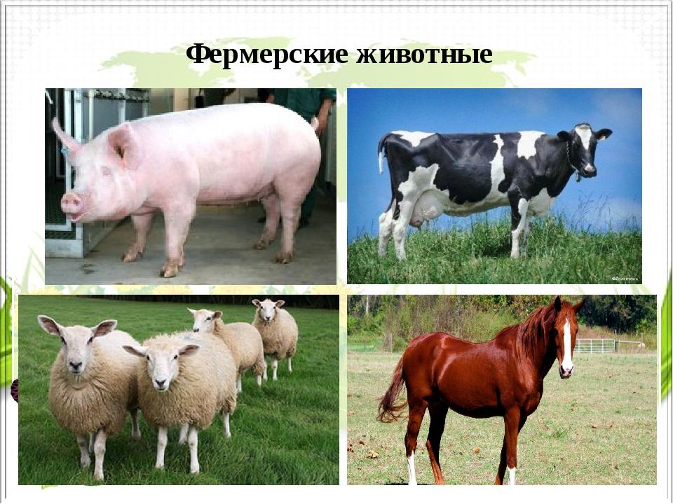 Фермерские животные