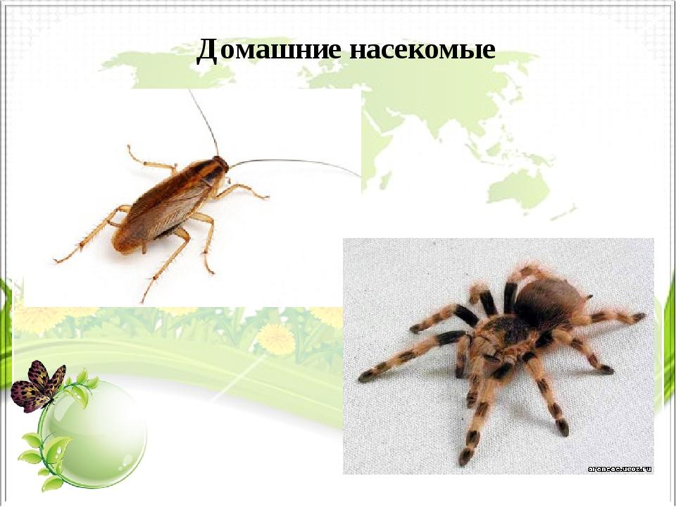 Домашние насекомые