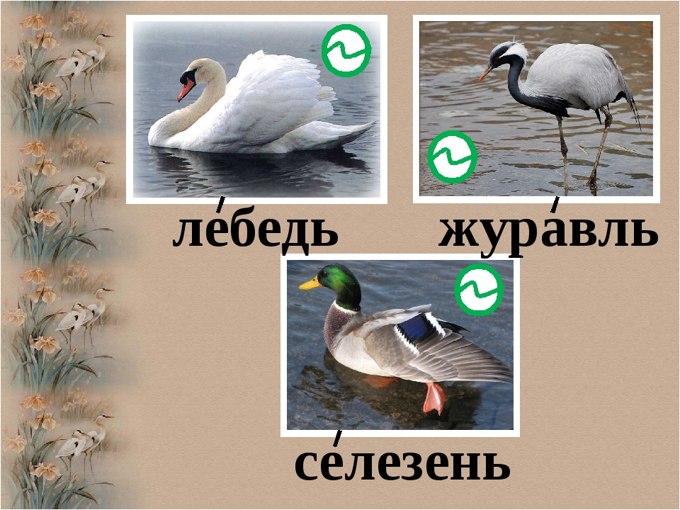 лебедь журавль селезень