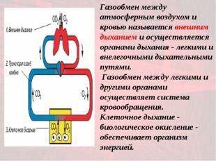 Газообмен между атмосферным воздухом и кровью называется внешним дыханием и о