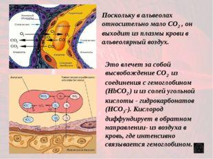 Это влечет за собой высвобождение CO2 из соединения с гемоглобином (HbСO2 ) и