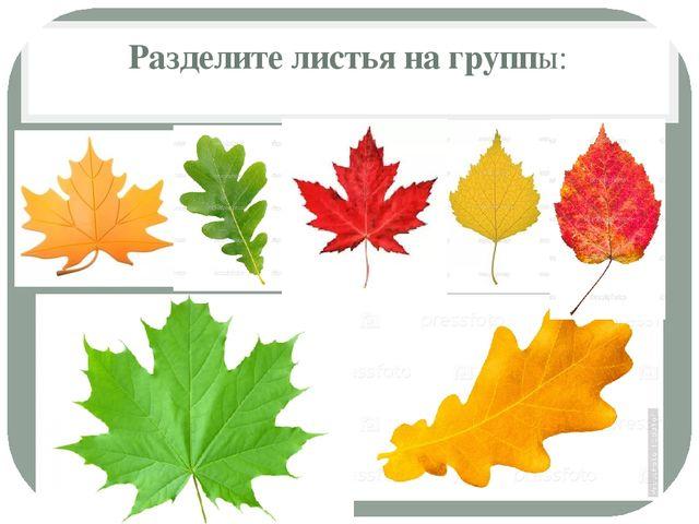 Разделите листья на группы: