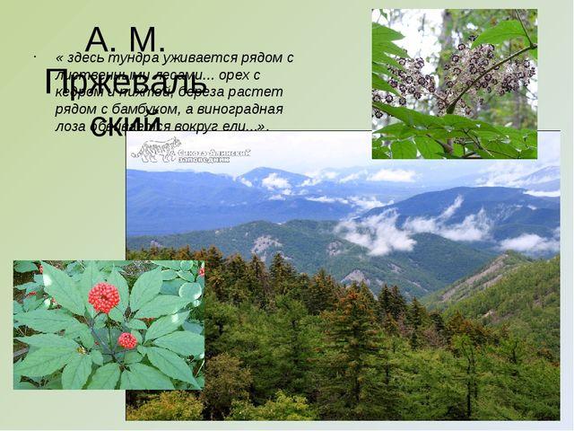 А. М. Пржевальский « здесь тундра уживается рядом с лиственными лесами... оре...