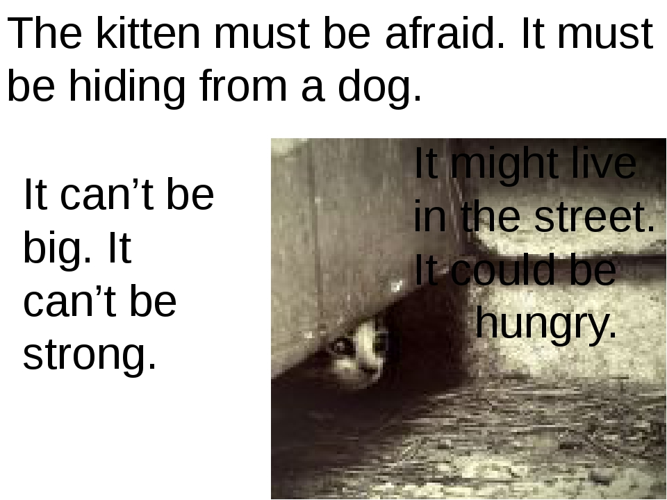 The kitten must be afraid. It must be hiding from a dog. It might live in the...